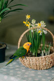 Large parrot with a yellow head Royalty Free Stock Images