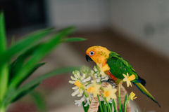 Large parrot with a yellow head Royalty Free Stock Photography