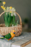 Large parrot with a yellow head Royalty Free Stock Photos