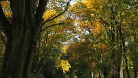 Path in the park. A large path of leaves in an autumn park stock video footage