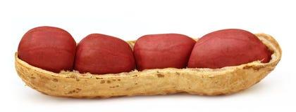 Large Peanut Royalty Free Stock Image