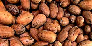 Large Pecans from Texas in bulk at Farmers Market royalty free stock photography