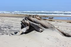 A huge piece of driftwood on the beach. A large piece of driftwood half buried in the sand. Waves roll in on a sunny day Royalty Free Stock Images