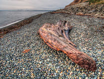 Large Piece of Wood on Pebble Beach Royalty Free Stock Photo