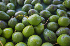 Large pile of Avacados at an outdoor market Stock Image