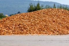 Large pile of corn drying Stock Images