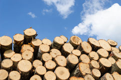 Large Pile Of Pine Logs On Blue Sky Background Stock Images