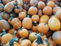 Large pile of orange and green pumpkins royalty free stock photo