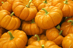 Large pile of pumpkins, close-up (full frame) Royalty Free Stock Image
