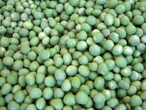 Large pile of shelled english peas Stock Image
