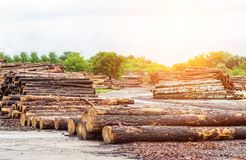 A large pile of timber logs at a woodworking plant, a sawmill, beam royalty free stock image