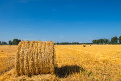 Large Piles of Hay Bales Royalty Free Stock Photos