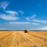 Large Piles of Hay Bales Stock Image