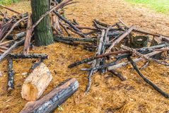 Large pine branches cut in the park.  Stock Images