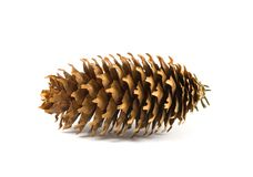Large pine cone Royalty Free Stock Image