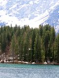 Large pine trees on the shores of Alpine Lake with the Alps Stock Photos
