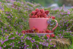 A large pink cup full of strawberries. A large pink cup full of strawberries, surrounded by purple flowers Stock Photo