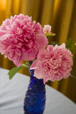 Large pink peony flowers Royalty Free Stock Photo