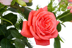 Large pink rose on white Royalty Free Stock Images