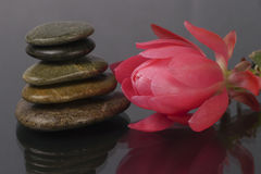 Large pink tropical flower and stones Spa. Large pink tropical flower and spa stones on a dark background stock images