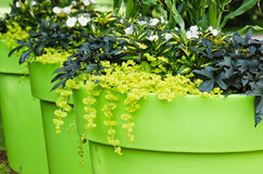 Large plant pots with flowers in the garden Stock Images