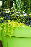 Large plant pots with flowers in the garden Royalty Free Stock Photo