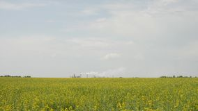 Large plant with smoke from the pipes. That stands next to the field of yellow rape flowers in the afternoon stock video footage