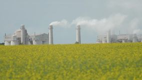 Large plant with smoke from the pipes. That stands next to the field of yellow rape flowers in the afternoon stock video