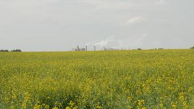 Large plant with smoke from the pipes. That stands next to the field of yellow rape flowers in the afternoon stock footage