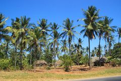 A large plantation of coconut palms and huts on the shores of the Indian Ocean, Malindi royalty free stock photography