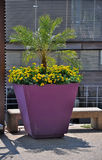 Large planter with yellow flowers Royalty Free Stock Photo