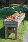 Large planters box with flowers Stock Images