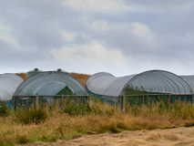 Large plastic foil tunnel greenhouses Stock Photo