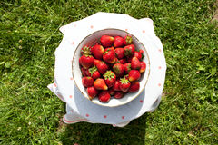 Large plate of ripe delicious strawberries Royalty Free Stock Photos