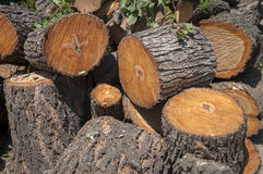 Large portions of a tree cut down. Outdoors Stock Images