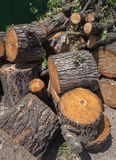 Large portions of a tree cut down. Outdoors Royalty Free Stock Photography