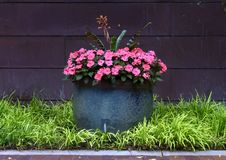 Large Pot Full Of Lovely Pink New Guinea Impatiens Flowers At The Dallas Arboretum Royalty Free Stock Photos
