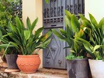 Large Pot Plants, Plaka, Athens Stock Image