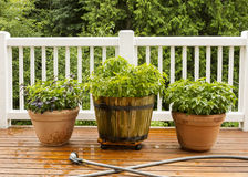 Large Pots filled with Herbs on Cedar Deck Royalty Free Stock Images
