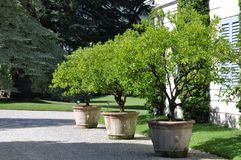 Large pots with plant in the garden Stock Images