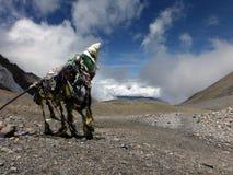 Large Prayer Flag at 5400m in Himalayas Stock Photos