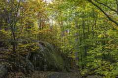 Large Precambrian Rock Next to a Trail - Ontario, Canada Stock Photo