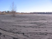 Large puddle of gray dried mud with wood waste production stock photography