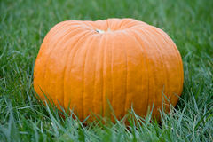 Large Pumpkin Stock Images