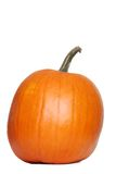 Large pumpkin Stock Image