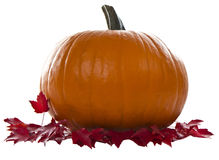 Large Pumpkin Royalty Free Stock Image