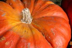 Large Pumpkin royalty free stock photography