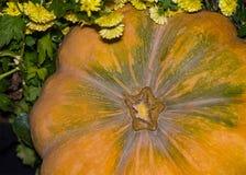 Large pumpkin background. Fruit orange green close-up background agronomy base web site design close-up equal symmetrical. Large pumpkin background. Fruit orange royalty free stock photos