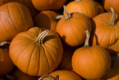Large pumpkin group Stock Photography