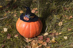 Large pumpkin in hat closeup on nature Royalty Free Stock Image